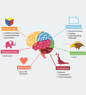 Vitamins and supplements for brain function picture 4